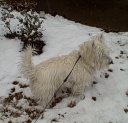 Max_in_the_snow_1_08