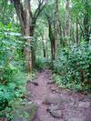 Path_in_the_woods_1